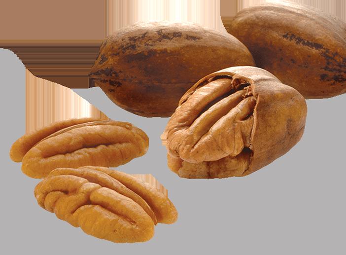 The Global Source for Nuts | John B  Sanfilippo & Son, Inc