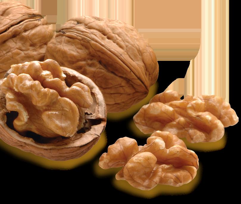 The Global Source for Nuts   John B  Sanfilippo & Son, Inc